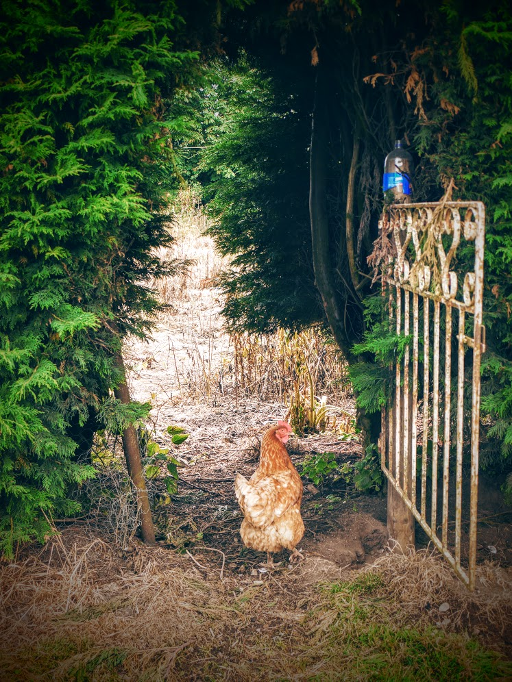 Restoration Girl * Bessie the hen entering Narnia